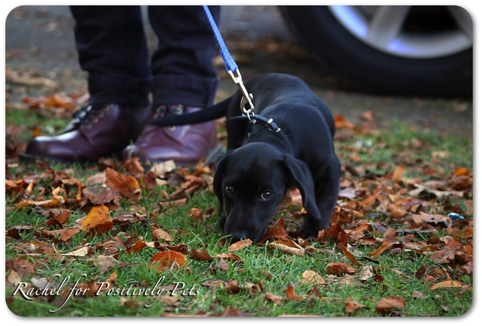 Harley the Puppy Searches for Answers