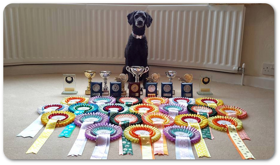 Poppy's Agility Trophies