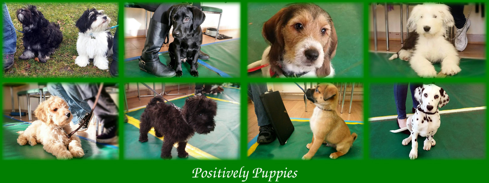 positive_puppies_gosforth