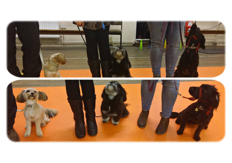 Dog Training with Gracie, Rio & Sonnet