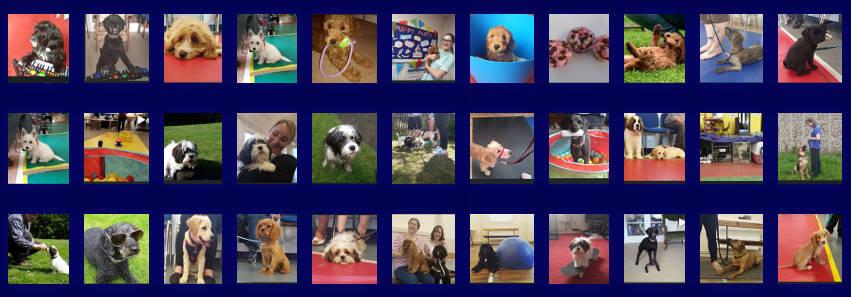 Dog Training Banner