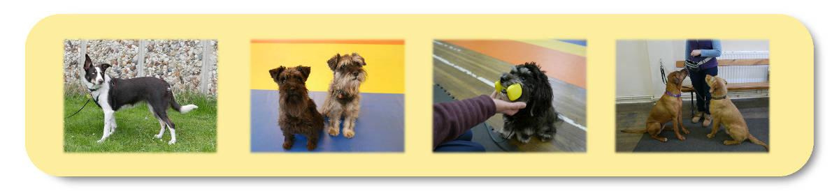 Dog Training Move on